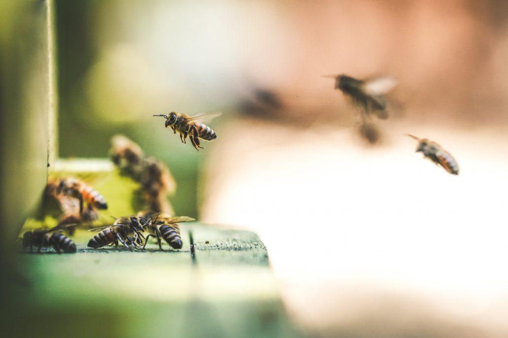 hôtel à abeilles et insectes : écologie et biodiversité dans le jardin